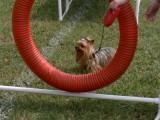 dogs 063 [1024x768].JPG