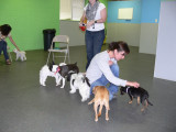 Nashville Small Breed Dog Meetup