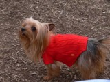 Zoe at the Dog Park