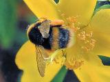 Bee net 2.jpg