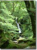 Wales445.jpg