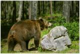 bear rock.jpg