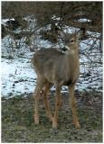 february 28Doe a Deer