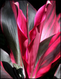 may 30Natural Beauty