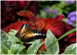 butterfly 1 web.jpg