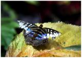 butterfly 2 web.jpg