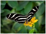 butterfly 4 web.jpg