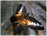 butterfly 5 web.jpg