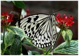 butterfly 6 web.jpg