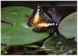 butterfly 7 web.jpg