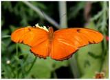 butterfly 10 web.jpg