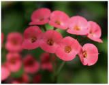 flower 6 web.jpg