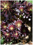 flower 7 web.jpg