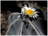 flower 8 web.jpg