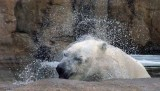 Zoo 09 029.jpg