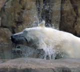 Zoo 09 031.jpg