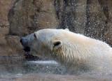 Zoo 09 032.jpg