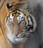 Zoo 09 069.jpg