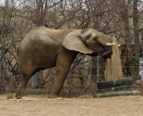 Zoo 09 077.jpg