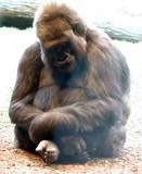 Zoo 09 153.jpg