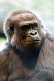 Zoo 09 154.jpg