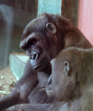Zoo 09 155.jpg