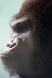 Zoo 09 157.jpg