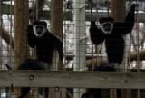 Zoo 09 198.jpg