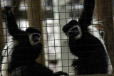 Zoo 09 201.jpg
