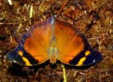 of butterflies and clouds 195.jpg