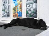Dozing Dog