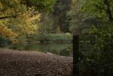 Autumn Tint.jpg