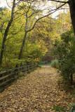Leafy Walk.jpg