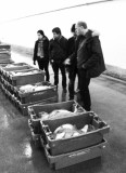 Early morning at Scheveningen Fish Auction