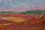 Paysages - Quand la nature se met à peindre / Landscapes - When Nature starts painting 1