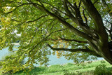Tree by the Rhine River