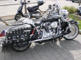 Harley Bones 1