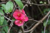 Late Blossom