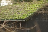 Mossy Shack