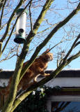 Monty up a tree March 2006.