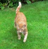 Monty.June 2006