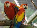 Queens Zoo-September, 2012 (Olympus Test)