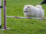 Dog Agility Trials-October, 2012