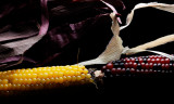 Yin and Yang in Corn