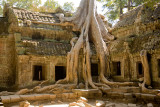 Khmer Spoong Tree roots remain from when the jungle completely engulfed the complex