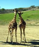 wild animal park - san diego, CA