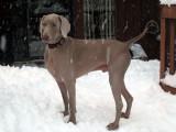 snow-spanked spokane