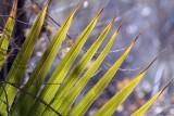 PalmSprings_130.jpg