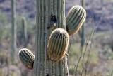075_Tucson.JPG