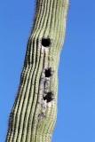 082_Tucson.JPG